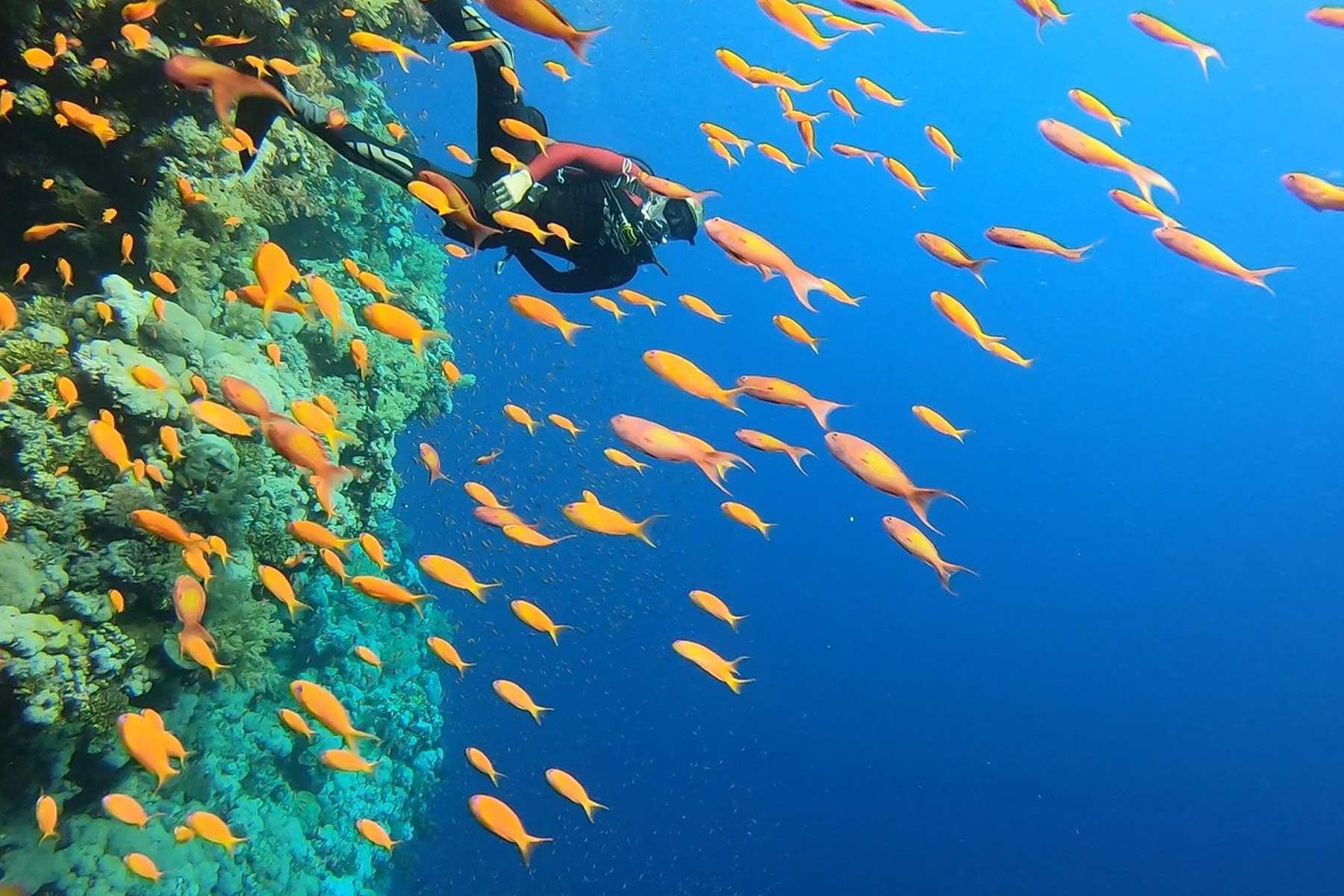 Diving in El Gouna