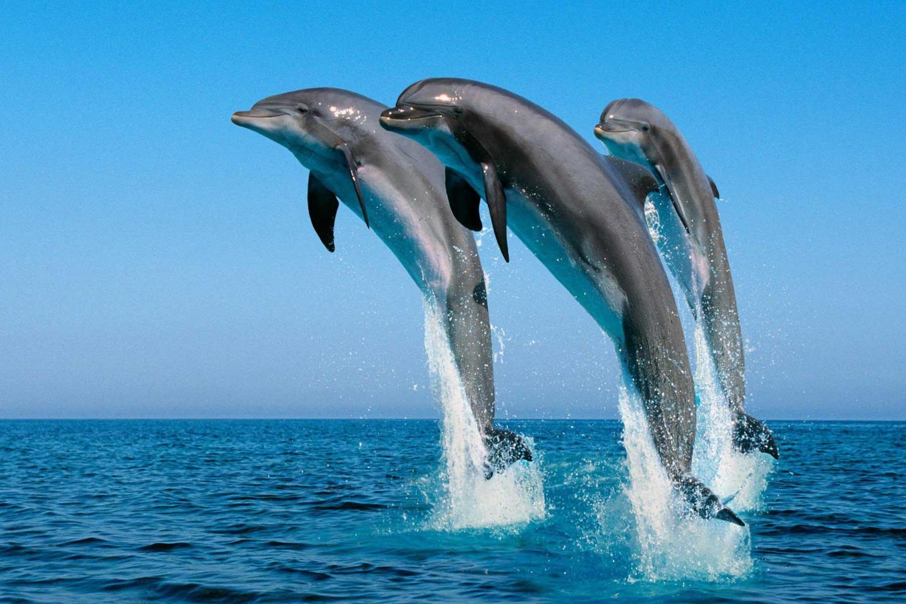 El Gouna Swim with Dolphins